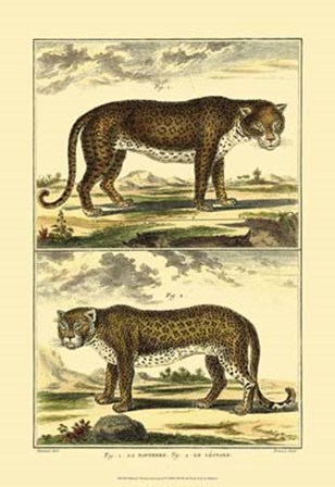 Panther and Leopard by Denis Diderot art print