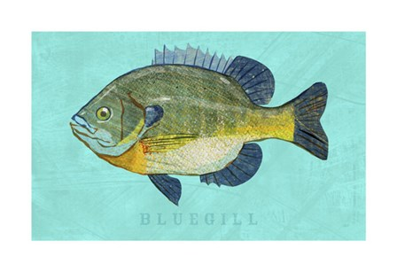 Bluegill by John W. Golden art print