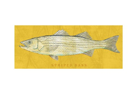 Striped Bass by John W. Golden art print
