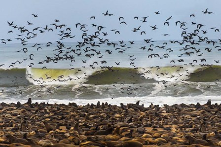 Cape Fur Seals, Cape Cross, Namibia by Panoramic Images art print