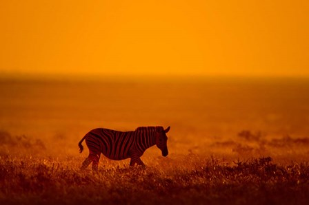 Zebra in a Field, Etosha National Park, Namibia by Panoramic Images art print