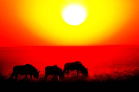 Wildebeests, Etosha National Park, Namibia by Panoramic Images art print