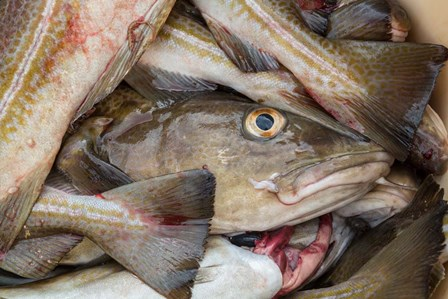 Fresh Cod, Iceland by Panoramic Images art print