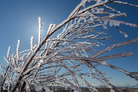 Ice Crystals on tree branches, Iceland by Panoramic Images art print