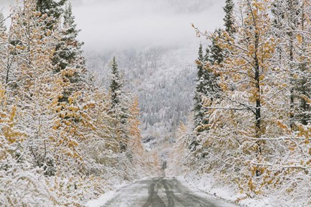 Empty Forest Road, McCarthy, Alaska by Panoramic Images art print