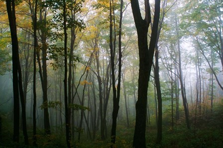 Misty Forest In Autumn by Panoramic Images art print