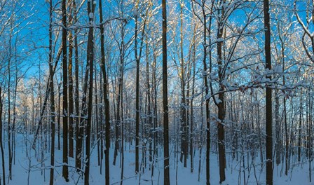 Winter Ice on Trees, New York State, USA by Panoramic Images art print