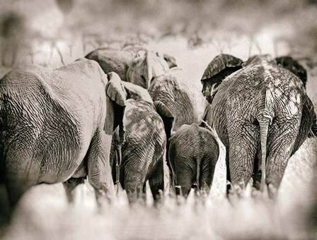 Vintage Elephant by Golie Miamee art print
