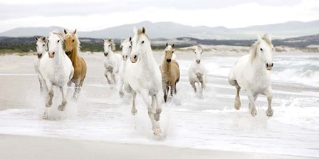 Horses on the beach (detail) by Zero Creative Studio art print