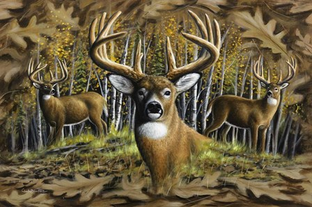 Whitetail Country by Chuck Black art print