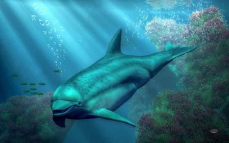 Smiling Dolphin by Daniel Eskridge art print