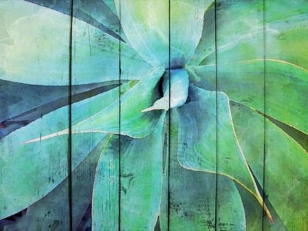 Creative succulent by Irena Orlov art print